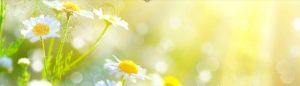 zlte kvety YT